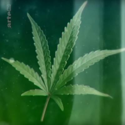 Cannabis sur ordonnance